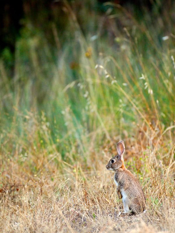 sobre-animais-coelho